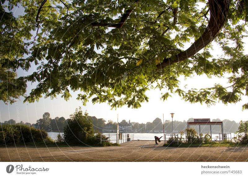 early-morning exercise Calm Sun Jogging Nature Water Tree Leaf Park Lakeside River bank Peaceful Oak tree Warming up Distend Physique one person Exterior shot