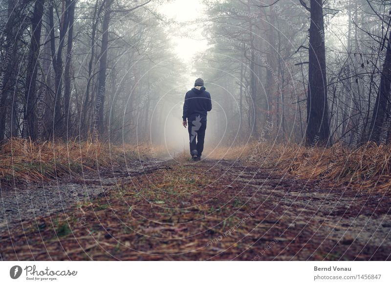Human being Man Blue Green Tree Loneliness Forest Adults Emotions Lanes & trails Grass Gray Moody Going Masculine Fog