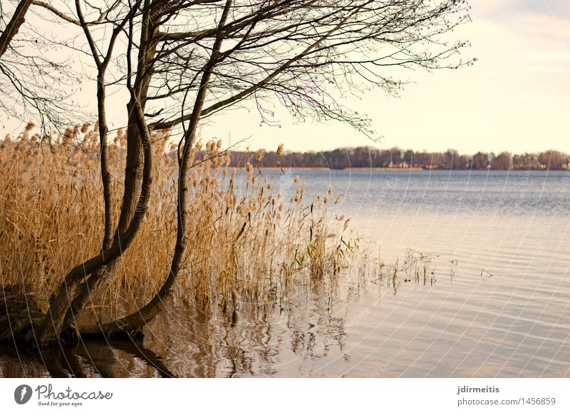 Nature Water Tree Landscape Environment Autumn Freedom Leisure and hobbies Lakeside