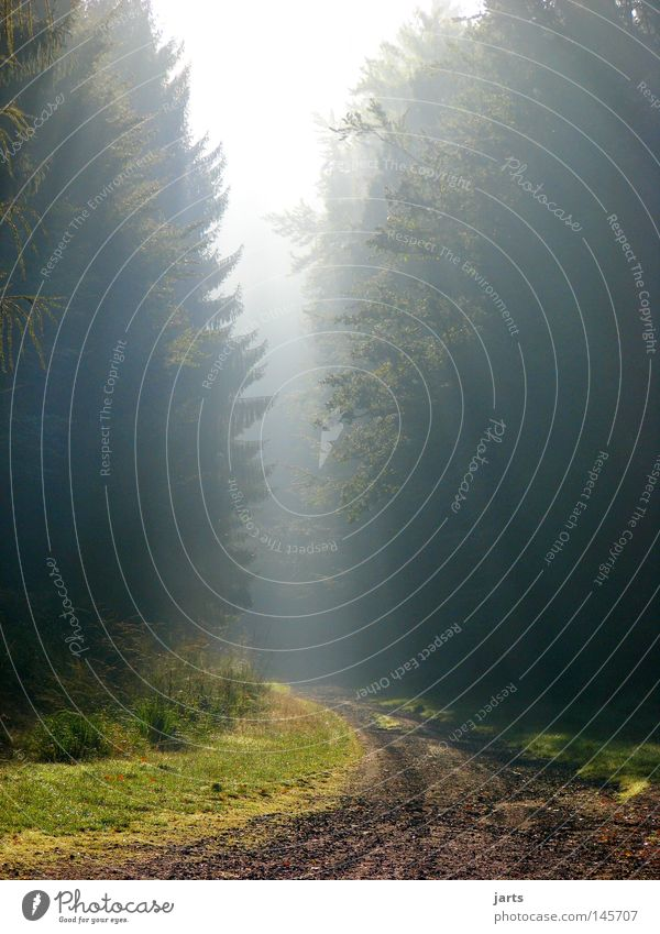 Sun Forest Autumn Lanes & trails Fog End Footpath Awareness Celestial bodies and the universe