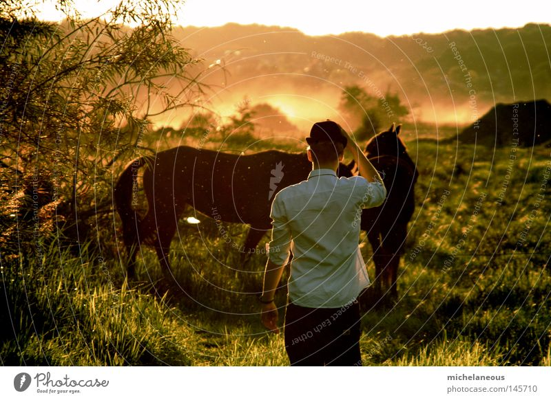 Sky Man White Green Tree Red Sun Far-off places Autumn Meadow Orange Horizon Blaze Fire Horse Longing