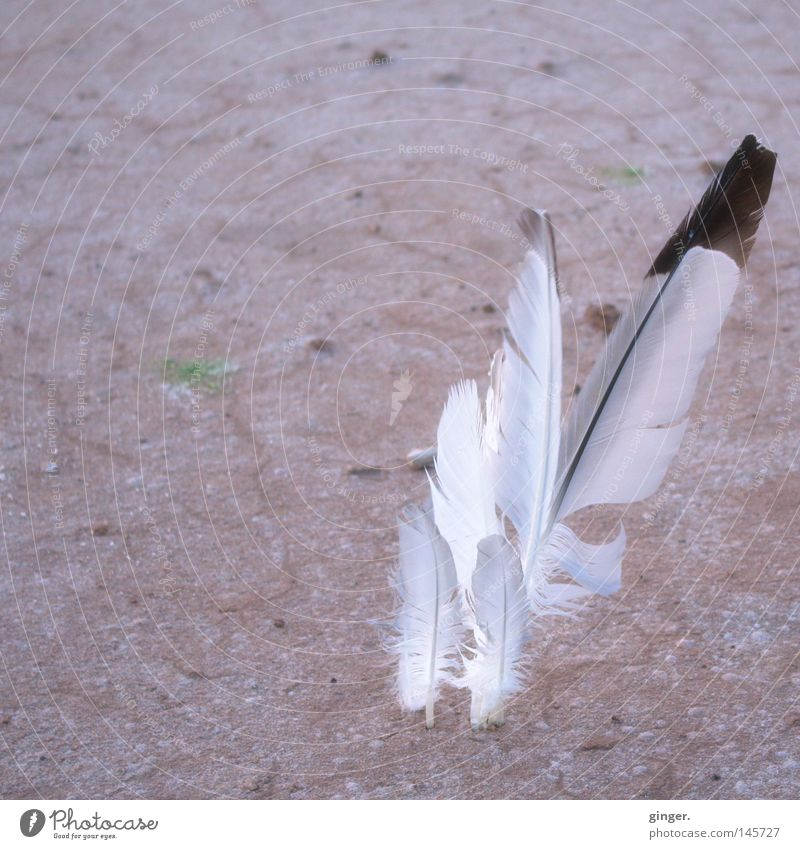 White Red Colour Black Sand Earth Feather Ground Dry Peace Delicate Strong Metal coil Smooth Hard Fantasy