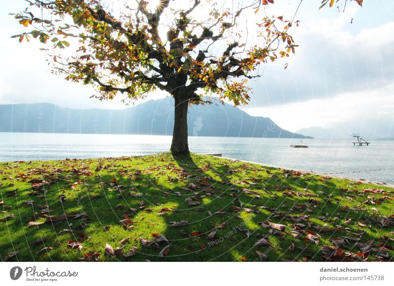 Water Tree Green Leaf Yellow Colour Autumn Mountain Lake Brown Orange Switzerland Seasons Lakeside Tree trunk Twigs and branches