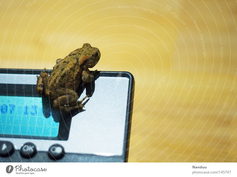 outlook Telephone Animal Frog Sit Amphibian Corner Quack Common toad Colour photo Copy Space right Copy Space top Full-length Display Exceptional Interior shot