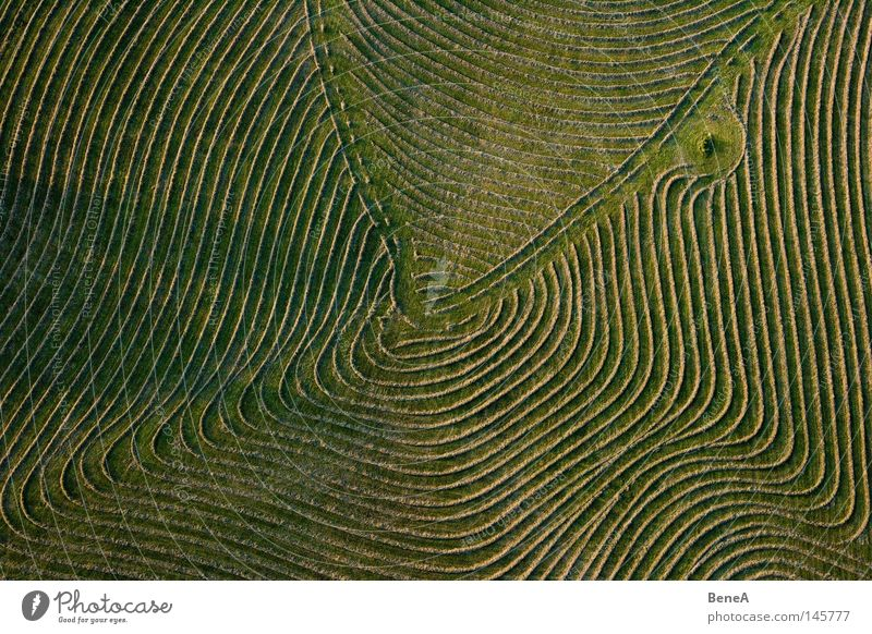 fieldwork Work and employment Economy Agriculture Forestry Trade Nature Landscape Grass Agricultural crop Meadow Field Ring Line Rotate Round Green Symmetry