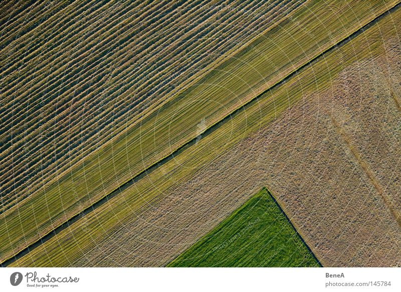 Nature Green Red Landscape Meadow Grass Line Work and employment Field Food Agriculture Tilt Diagonal Rotate Economy