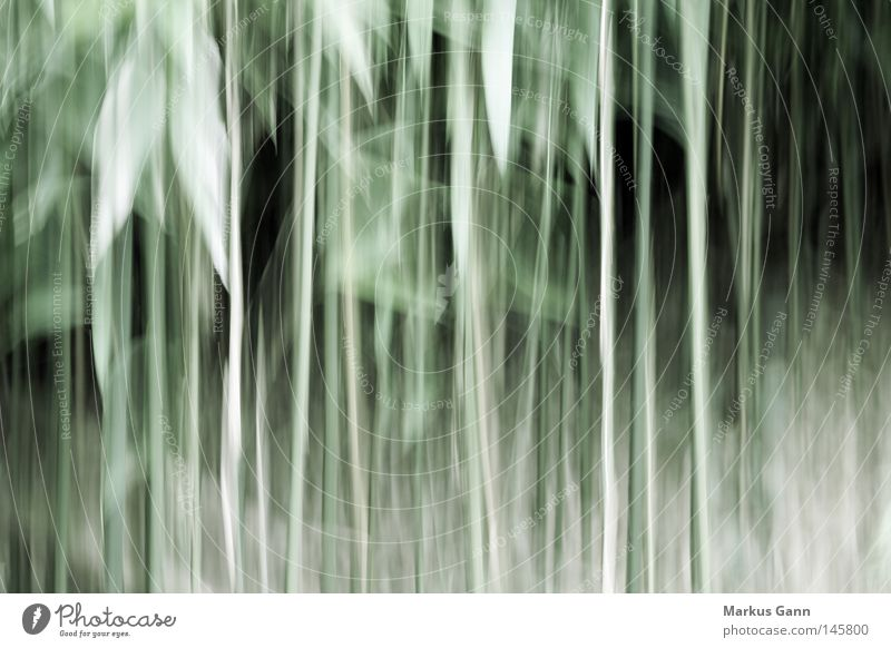 Green Leaf Forest Line Art Bushes Abstract Transience Distorted Discern Vertigo Undergrowth