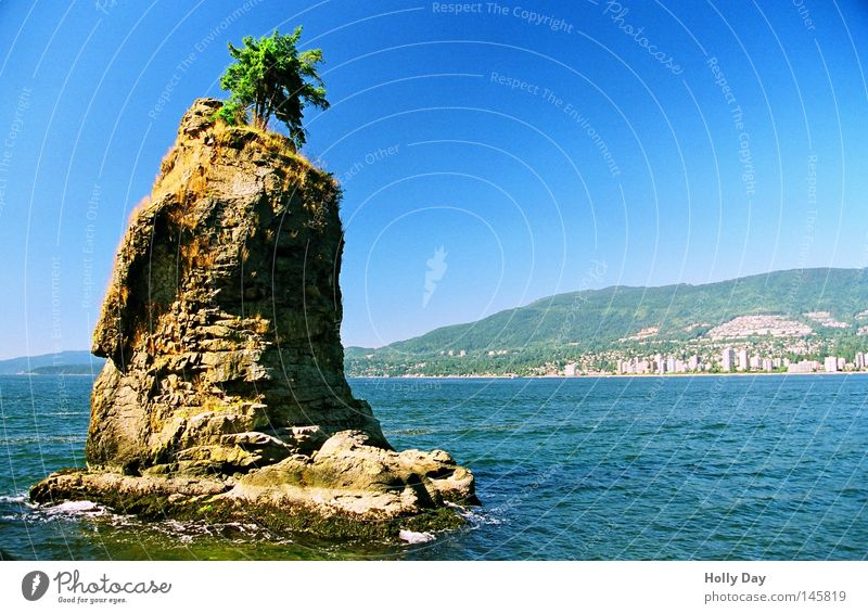 Water Tree Ocean Green Blue Loneliness Above Funny Small Rock Island Obscure Canada Whimsical Bizarre