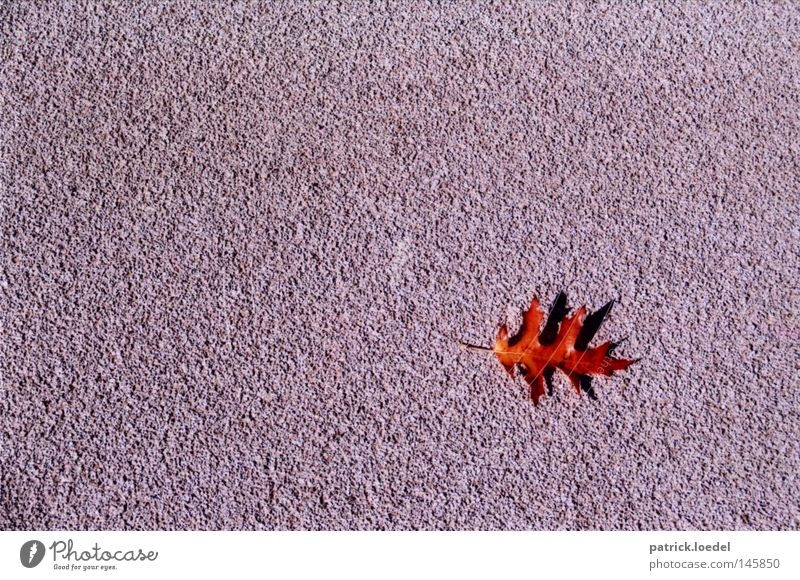 [HH08.3] Foliage trap Leaf Autumn Red Asphalt Gray Places Empty Loneliness Esthetic Beautiful Minimalistic Shadow Maple tree September October Death Small