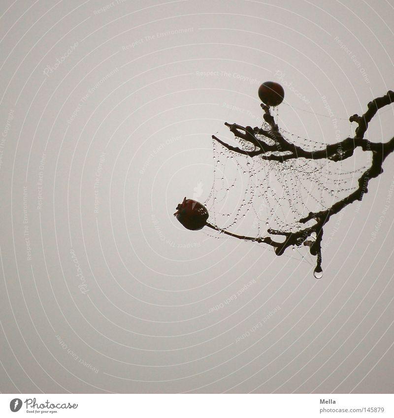 Dark Autumn Death Gray Sadness Fog Drops of water Grief Gloomy Drop Net Distress Berries Interlaced Dreary Branchage