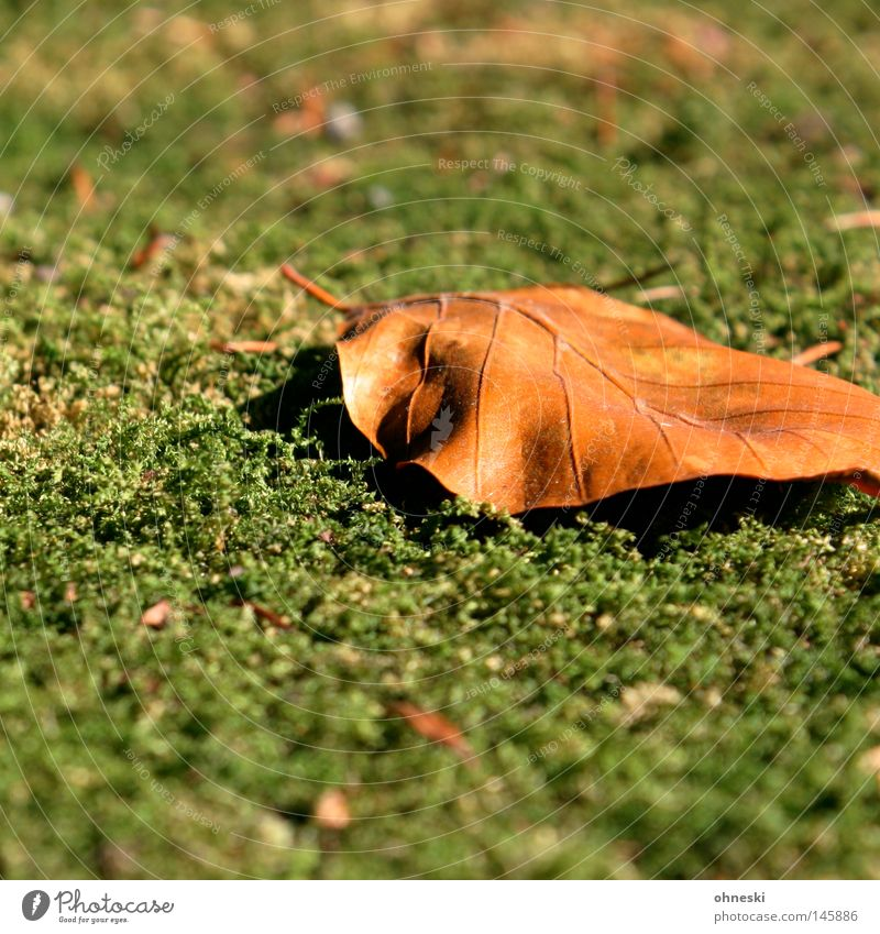 leaf on moss Blur Autumn Moss Leaf Brown Green Transience To go for a walk September Fallen Seasons