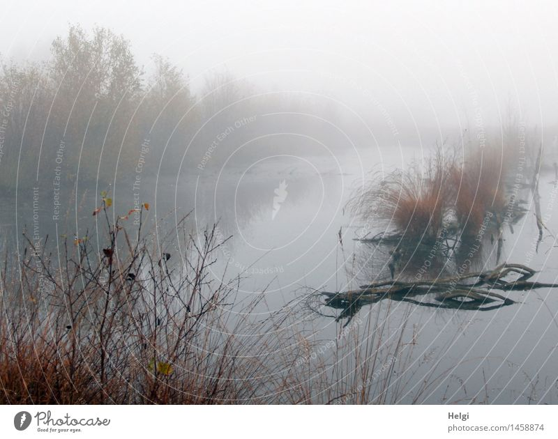 fog in the moor... Environment Nature Landscape Plant Water Autumn Fog Grass Bushes Wild plant Branch Bog Marsh Moor lake Stand To dry up Growth Esthetic