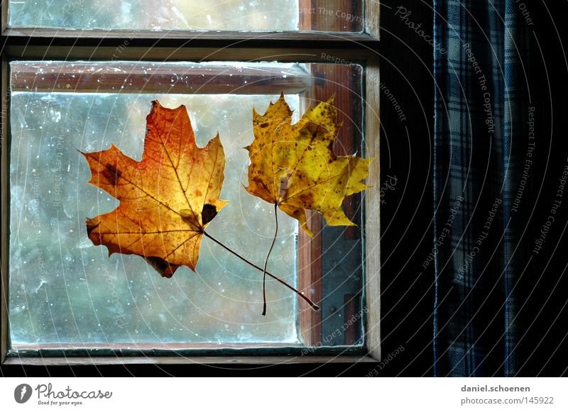 Autumn 5 Leaf Window Light Decoration Window pane Colour Seasons Living or residing Living room Detail