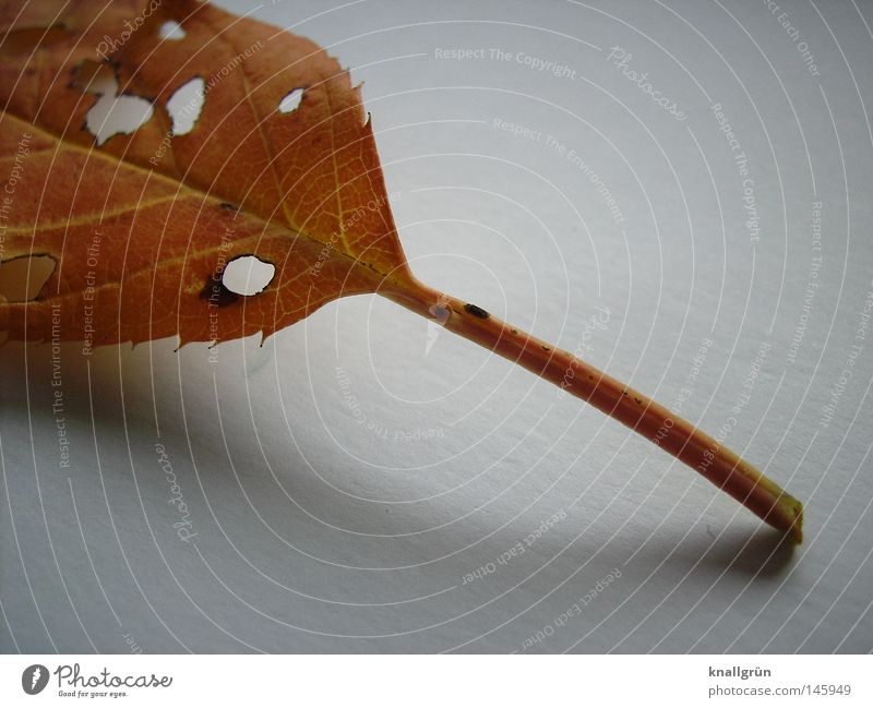decay Leaf Autumn Seasons Brown Golden yellow Stalk Hollow Shadow Bright White Decline Nature Plant Old End Transience Structures and shapes fallen lifetime