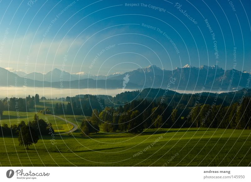 A New Day Begins Grass Tree Sunrise Allgäu Morning Meadow Mountain range Hill Cloud cover Fog Forest Sky Street Dawn Nature Valley