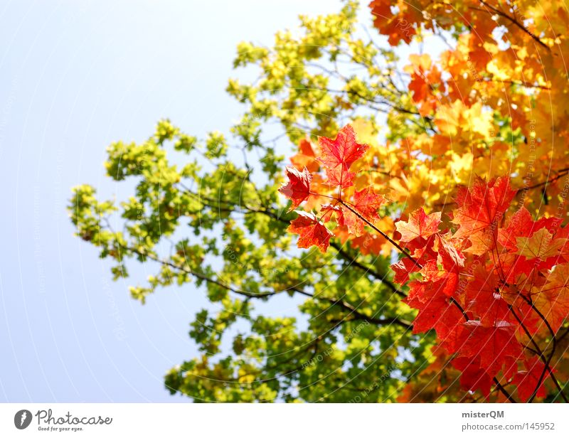 What A Beautiful Day - Autumn Day Leaf Tree Nature Pure Esthetic Multicoloured Blue Sky Beautiful weather Wind Leaf canopy Green Leaf green End Seasons Red