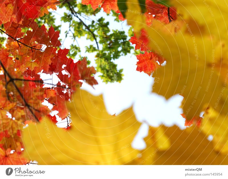 Course of life - autumn day Autumn Leaf Nature Pure Beautiful Esthetic Multicoloured Blue Sky Beautiful weather Wind Leaf canopy Green Leaf green End Seasons