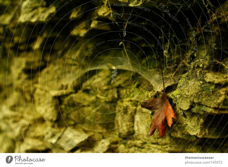At the sandstone rock... Sandstone Leaf Brown Autumn Mountain Rock spider web green dark Bright Contrast Calm Balanced Old hang Individual