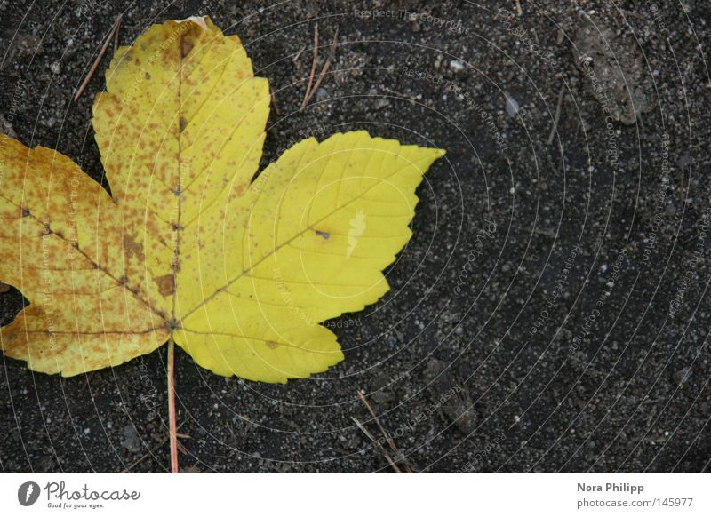 on the way... Copy Space right Contrast Bird's-eye view Beautiful Trip Nature Earth Autumn Leaf Line Natural Yellow Gray Hope Belief Symmetry Transience Seasons