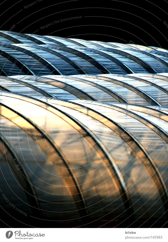 Greenhouse aesthetics Tunnel Packing film Sun Light Shadow Colour Orange Yellow Black Blue White Round Waves Visual spectacle Beautiful Tasty Esthetic Vegetable