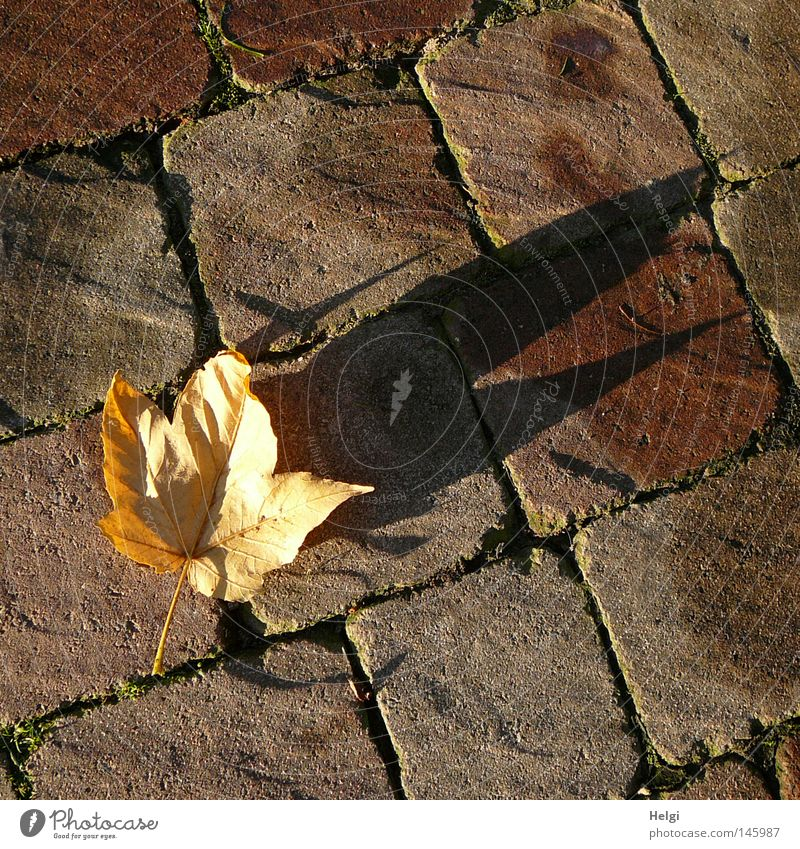 Tree Leaf Yellow Colour Dark Autumn Stone Park Line Bright Brown To go for a walk Lie To fall Transience Point