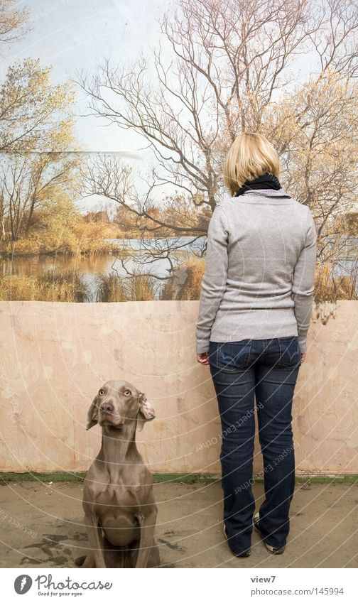 matter of opinion Dog Looking Museum Exhibition Audience Photography Painting and drawing (object) Poster Image Perspective Things Puppy Weimaraner Watchfulness