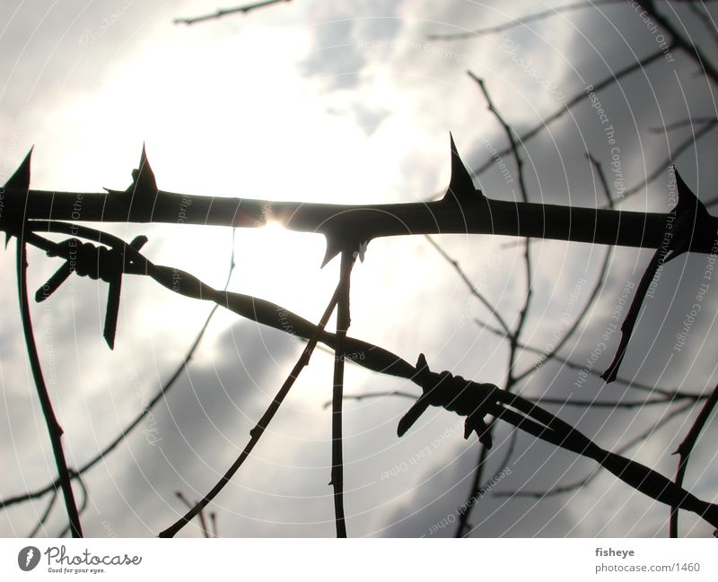 thorns and barbed wire Barrier Exclusion zone Light Clouds Historic Sun