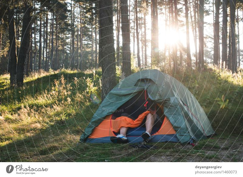 Tent in the forest on sunlight Nature Vacation & Travel Green Beautiful Summer Sun Tree Relaxation Landscape Forest Grass Park Tourism Leisure and hobbies