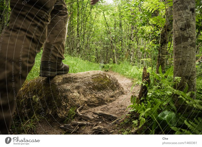 Nature Vacation & Travel Green Tree Forest Stone Feet Going Hiking Closed Adventure Footpath Elements Target Barrier Virgin forest