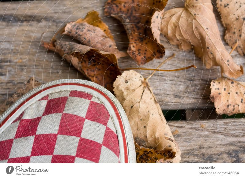 autumn foliage Leaf Delivery truck Checkered Wood Bench Stand Red Multicoloured White Brown Autumn Macro (Extreme close-up) Close-up Beautiful gravely Autumnal