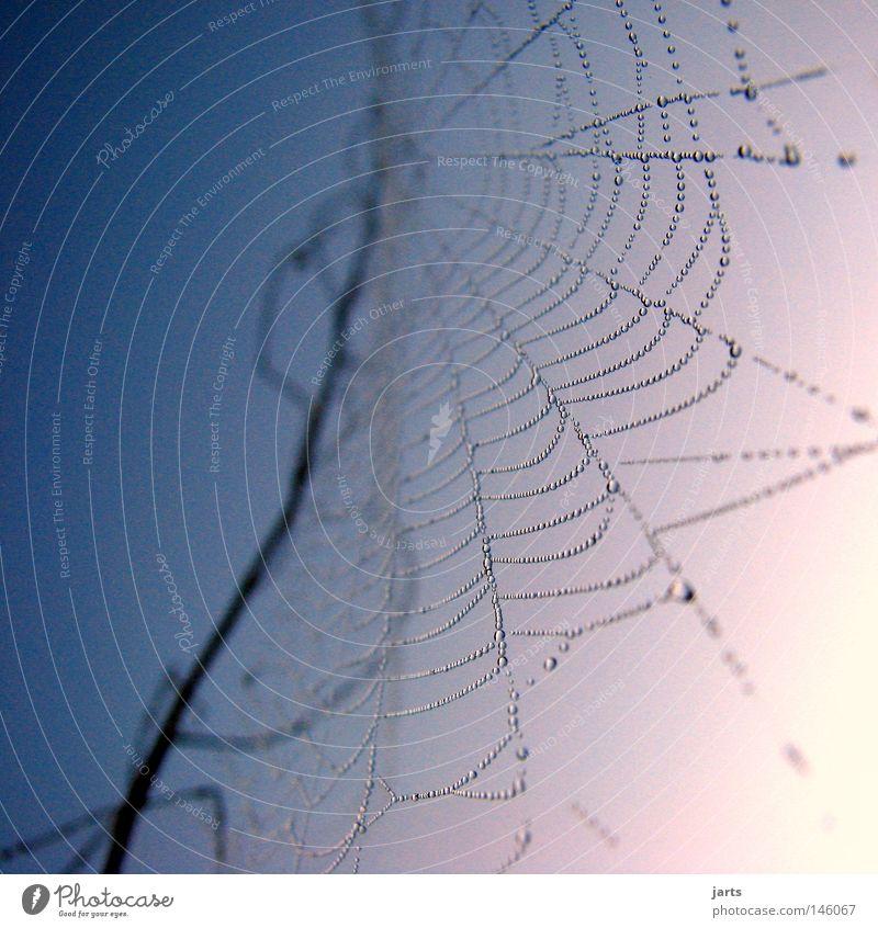 Sky Autumn Drops of water Network Drop Net Dew Spider Spider's web Indian Summer