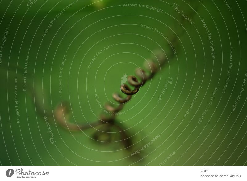 Nature Plant Green Grass Background picture Growth Depth of field Blade of grass Spiral Striped Fine Unclear Focal point Focus on Curlicue Rotated