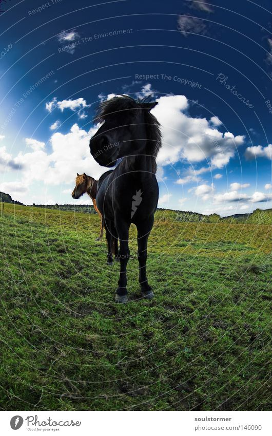 Sky Nature Green Summer Animal Clouds Black Far-off places Meadow Grass 2 Brown Pair of animals Island Stand In pairs