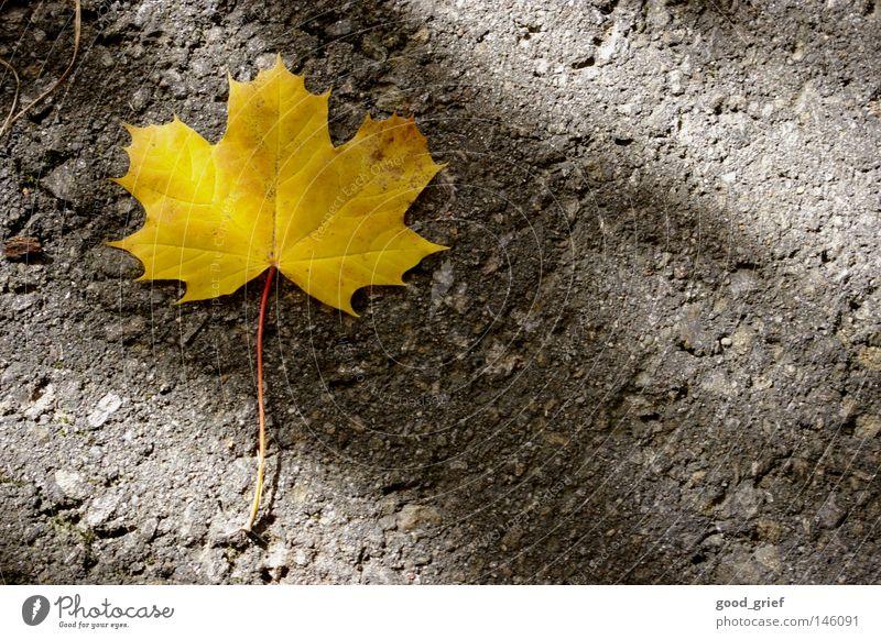Leaf Loneliness Yellow Street Autumn Lanes & trails Grief Floor covering Asphalt Stalk Distress Maple tree Maple leaf