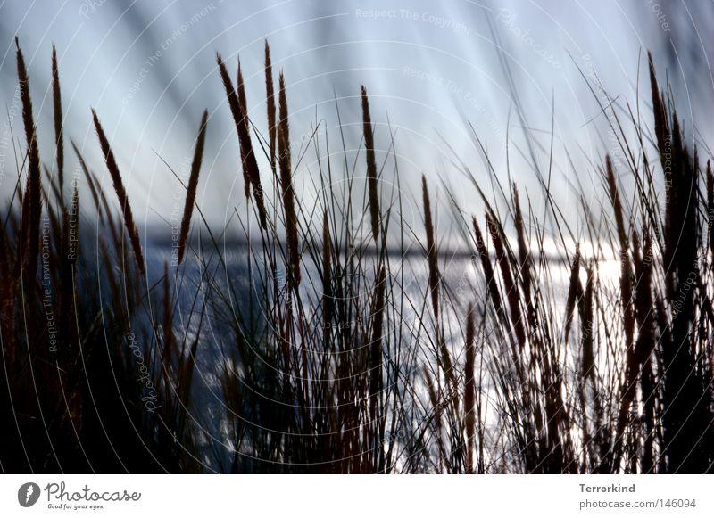 Water Sun Summer Beach Ocean Vacation & Travel Grass Dream Sand Watercraft Waves Stripe Beach dune Dune Bay France
