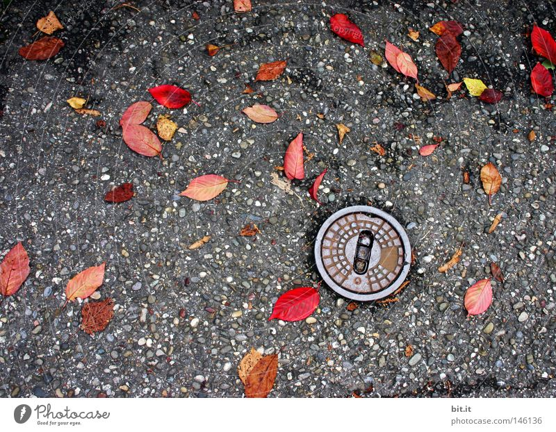 water supply Street Gully Transmission lines Water pipe Leaf Autumn Colouring To fall Lie Gray Red Yellow Autumn leaves Distributed Tread Ground Wet Damp Nature