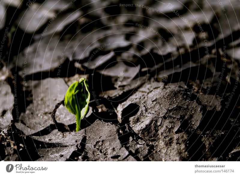 RISEN FROM POWER Earth Crust Ground Dry Old Motionless Precarious Sand Ashes Crack & Rip & Tear Stone Leaf Green Force Strong Sprout Fight Resurrect
