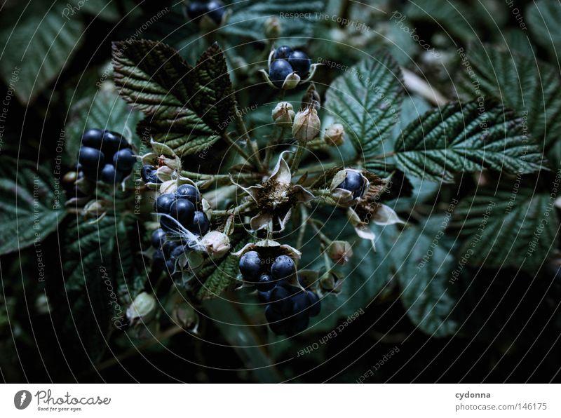 Nature Blue Leaf Nutrition Healthy Food Fruit Arrangement Growth Mature Harvest Ecological Vitamin Organic produce Berries Grasp