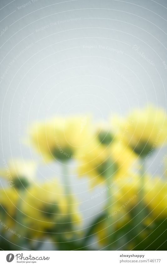 Communication through flowers Flower Trashy Blur Yellow Green Plant Language Facial expression Expression Emotions Summer Blossoming Upward Worm's-eye view Gray