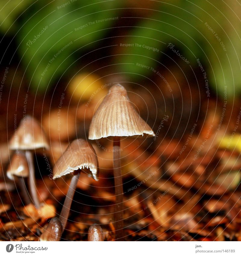Autumn Weather Search Seasons Harvest Collection Mushroom October