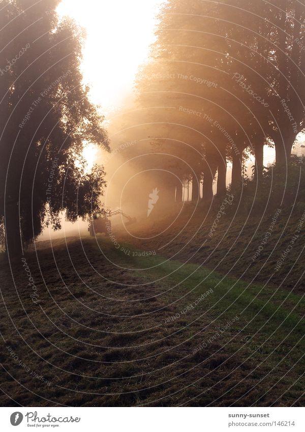 Tree Meadow Fog Radiation Beautiful weather Tractor Dawn