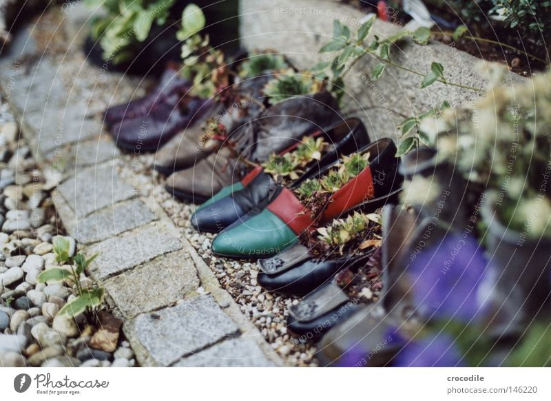 shoe parade Footwear Going Boots Leather Multicoloured Blur Analog Single-lens reflex camera Garden Plant Growth Life Pot Stone Recycling Granite Green