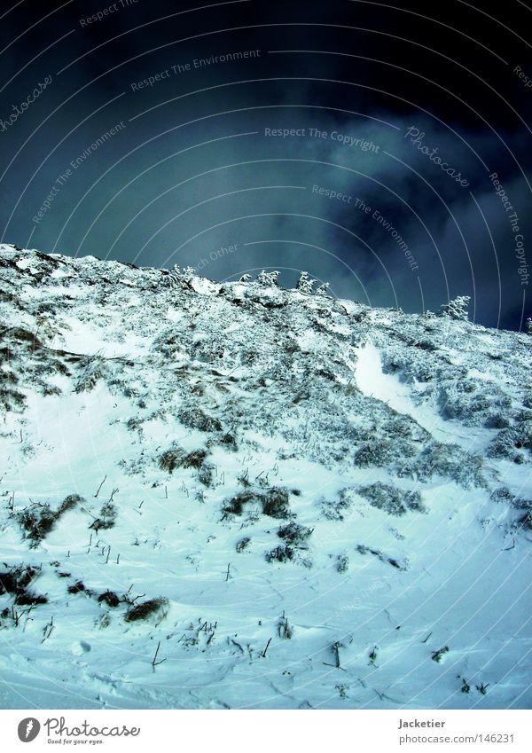 Apocalypse. Tree White Gray France Auvergne Puy-de-dôme Mountain cloud play Snow Sky Blue clermont-ferrand long way Effort Hubertus Magnus
