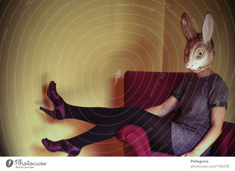 Anonymous Hare & Rabbit & Bunny Animal Armchair Woman Dress Stockings Footwear High heels Velvet Purple Living room Mask Legs Room Easter Bunny