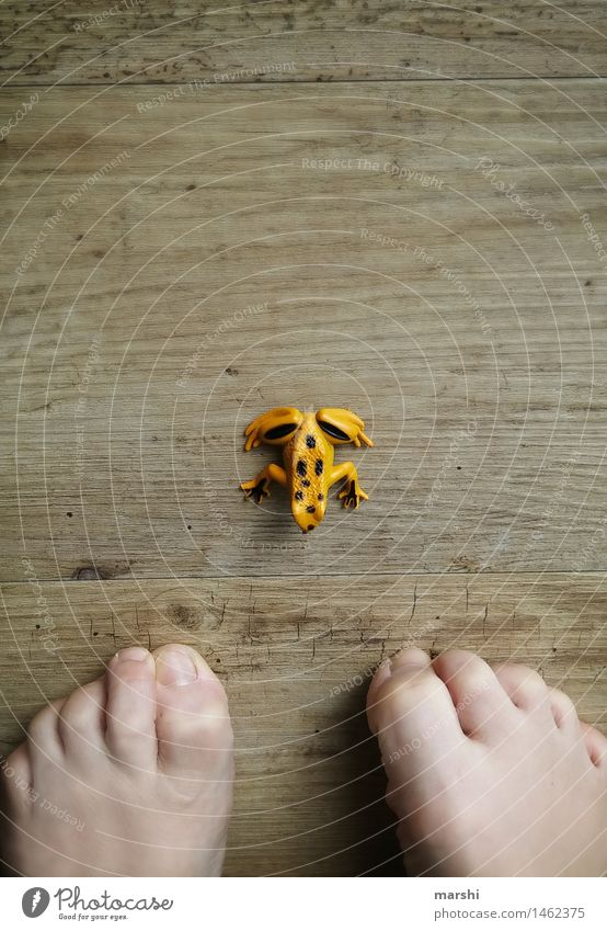 encounters Human being Feet 1 Moody Toes Encounter Frog Fear Yellow Wooden floor Idea wittily Animal Animalistic Colour photo Interior shot Detail Day