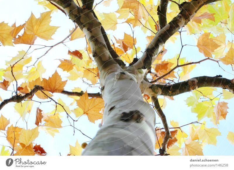Sky Green Blue Tree Leaf Yellow Colour Autumn Brown Orange Perspective Transience Tree trunk Seasons Cyan Branchage
