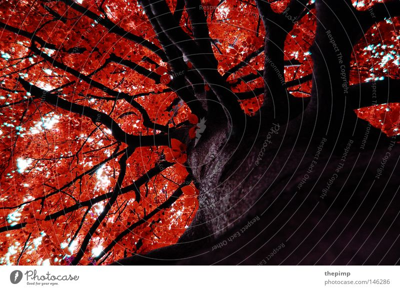 Sky Tree Red Leaf Forest Autumn Wood Brown Arrangement Seasons Tree bark Branchage Wood grain Twigs and branches Texture of wood