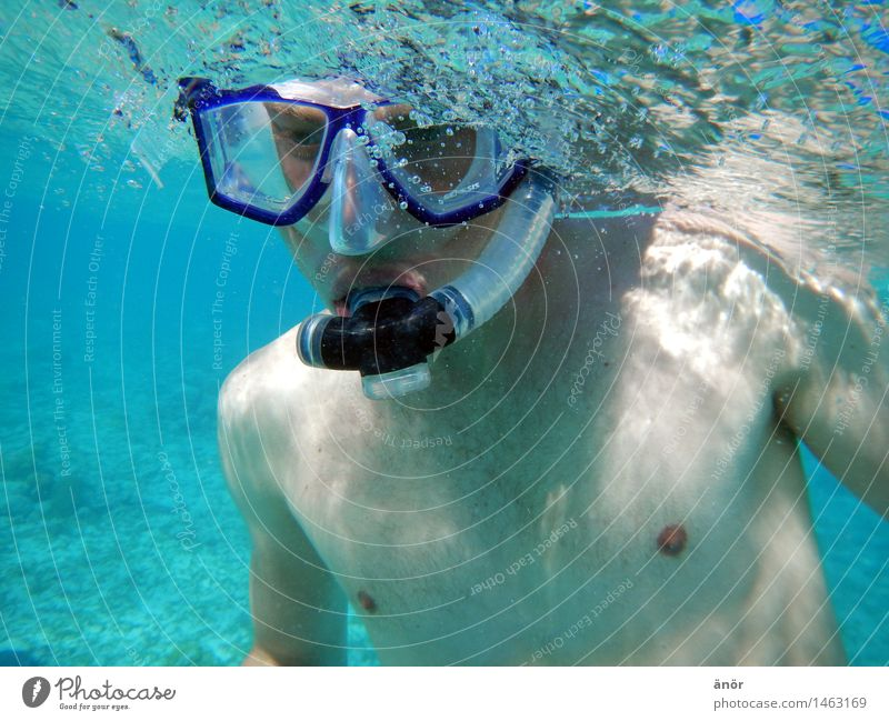 dive diagonally Summer vacation Ocean Aquatics Swimming & Bathing Dive Snorkeling snorkel diving goggles upper body free Observe Relaxation To enjoy Hunting