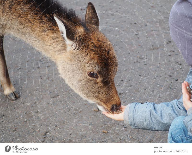 Deer II Food Eating Trip Adventure Masculine Child Boy (child) 1 Human being 3 - 8 years Infancy Zoo Nature Lanes & trails Coat Cap Animal Wild animal Pelt