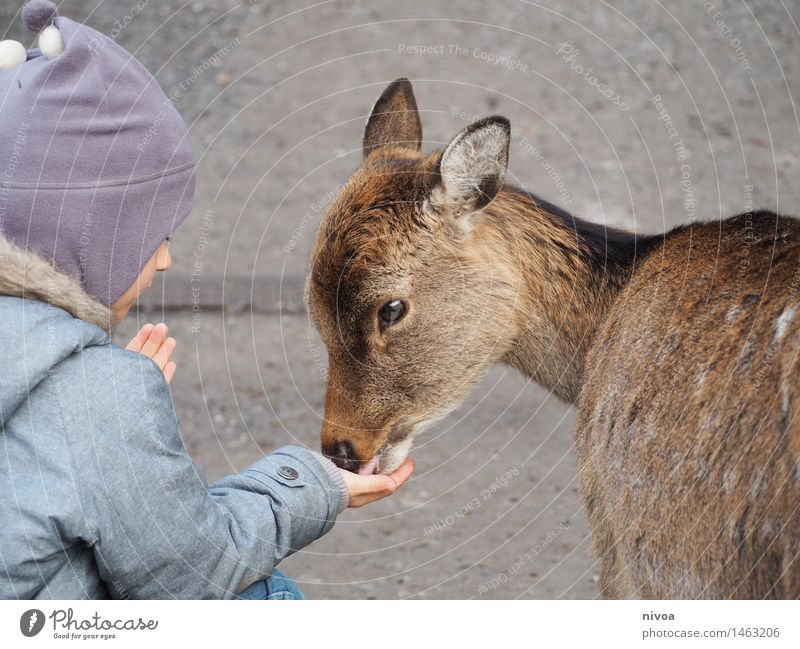 reh Food Trip Adventure Feminine Child Boy (child) 1 Human being 3 - 8 years Infancy Nature Winter Lanes & trails Coat Cap Animal Wild animal Roe deer Observe